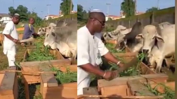 See K1 De Ultimate's Farm, How Cows Should Be Reared In Nigeria (Photos, Video)…